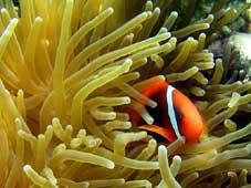 San hô Việt Nam có thể so sánh với san hô thế giới