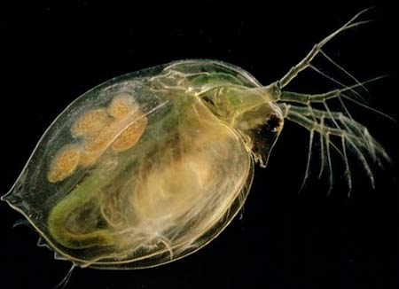 Thế giới vi khuẩn - những điều thú vị
