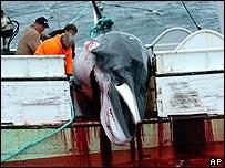 Nhật vận động săn bắt cá voi