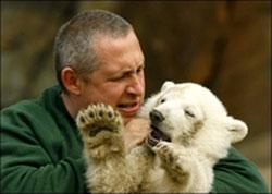 Một chú gấu Bắc cực chào đời tại vườn thú Berlin