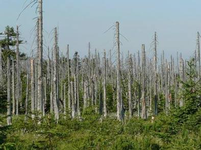 Mưa axit tàn phá môi trường sống của con người