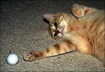 Mèo Cinnamon đi vào lịch sử khoa học