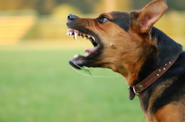 Nếu bạn hung hãn, chó của bạn cũng vậy