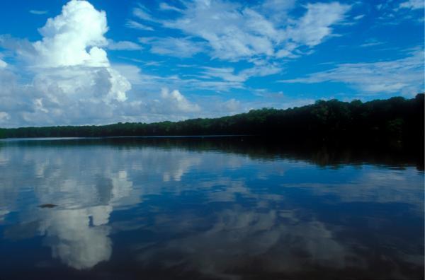Sông Amazon 11 triệu năm tuổi