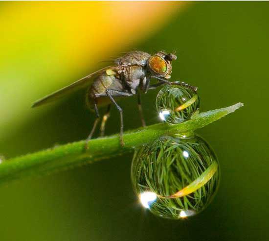 Những bức ảnh đẹp nhất về môi trường 2010