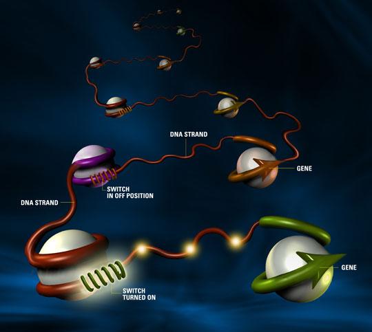 Bí ẩn bộ gen người