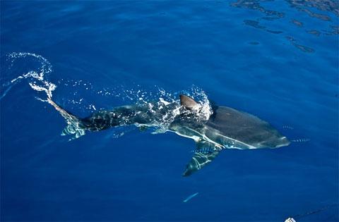 Chạm trán sát thủ đại dương