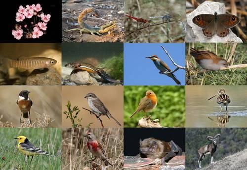 Đa dạng sinh học: Cần cân bằng giữa bảo tồn và khai thác