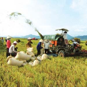 Ứng dụng công nghệ sinh học trong nông nghiệp