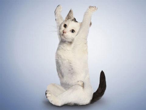 Ảnh đẹp: Mèo tập yoga