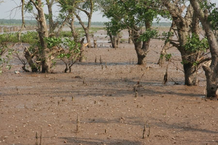 IUCN, MFF tài trợ bảo vệ rừng ngập mặn tại Nam Định