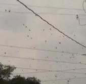 """Video: """"Mưa"""" nhện ở Brazil"""