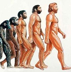 Vì sao loài người mất lông trên cơ thể?