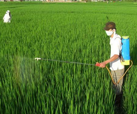 43% khí nhà kính từ hoạt động nông nghiệp