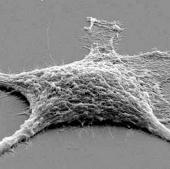 Tạo được tế bào xác sống