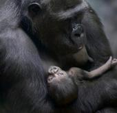 """Ngắm các """"em bé"""" động vật đáng yêu"""
