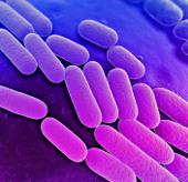 Xuất hiện dòng vi khuẩn lây lan không thể cứu chữa