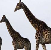 Những động vật khổng lồ trong tự nhiên