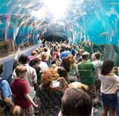 Khám phá thủy cung lớn nhất thế giới