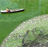 Nước duyên hải Trung Quốc ô nhiễm nghiêm trọng
