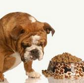 Ăn nhầm thực phẩm chó, mèo có nguy hiểm?