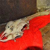 Phát hiện xương của rồng ở Trung Quốc