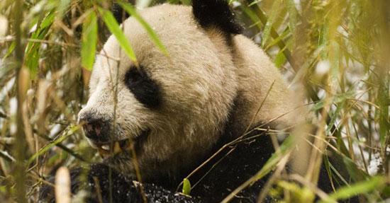 """Những động vật đang """"đối mặt"""" với nguy cơ tuyệt chủng"""