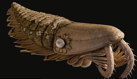 Phát hiện hóa thạch tôm khổng lồ, răng sắc như dao cạo