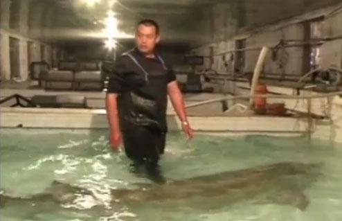 Video: Bắt được cá tầm khổng lồ ở Trung Quốc