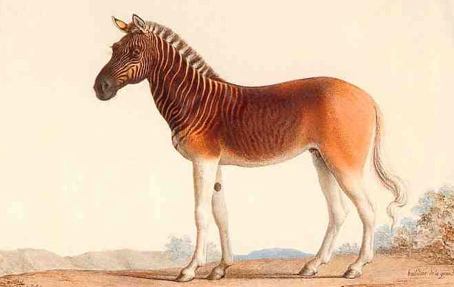 Những loài động vật chỉ còn trong truyền thuyết