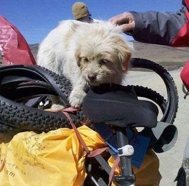 Con chó chạy bộ gần 2000km