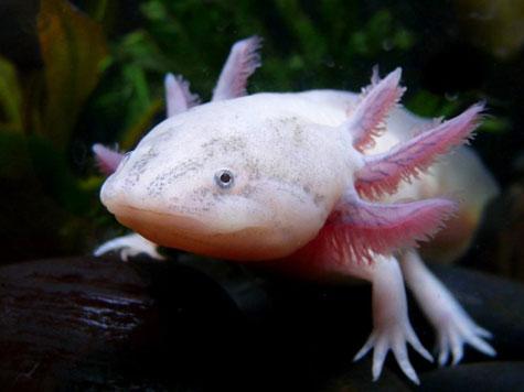 Những con vật kỳ lạ nhất hành tinh
