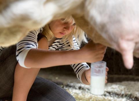 """Con bò """"cho sữa người"""""""