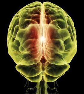 Phát hiện hai bán cầu não hoạt động độc lập