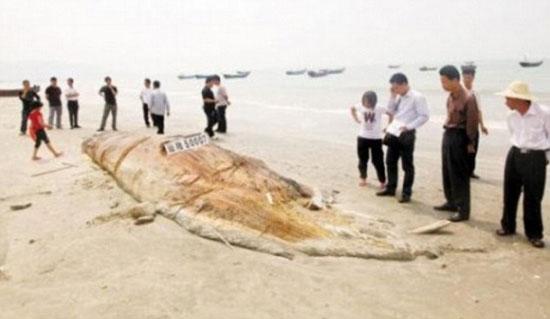 Động vật khổng lồ dạt bờ biển Trung Quốc