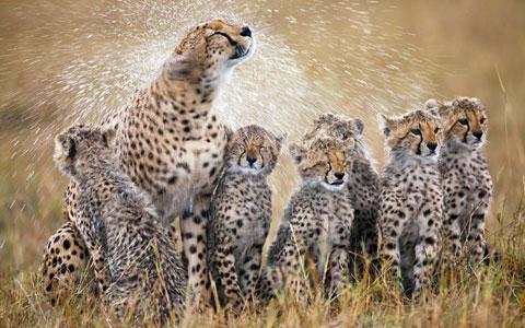Ảnh đẹp: Động vật chống nóng
