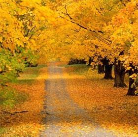 """Giải mã bí ẩn """"mùa thu lá rơi vàng"""""""