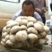 Video: Cây nấm khổng lồ ở Trung Quốc