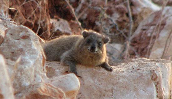 Tại sao thỏ đá thích sống gần người?