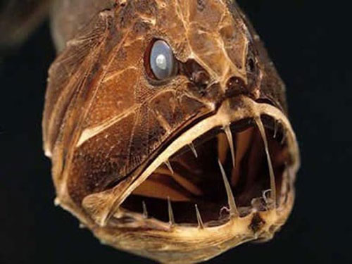 """Những loài """"cá quỷ"""" ghê sợ nhất thế giới"""