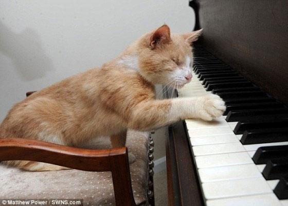 Mèo mù chơi đàn