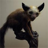 Loài khỉ được coi là hiện thân của quỷ dữ