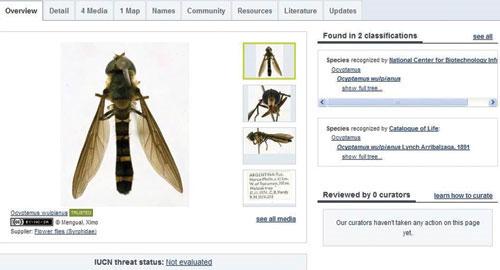 Bách khoa toàn thư sinh vật trực tuyến