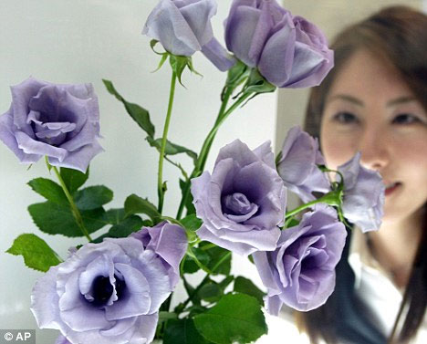 Hoa hồng xanh sắp được bán tại Mỹ