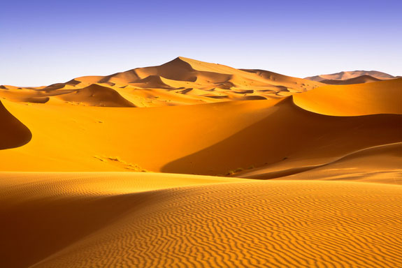 Thế giới hoang dã trên hoang mạc Sahara