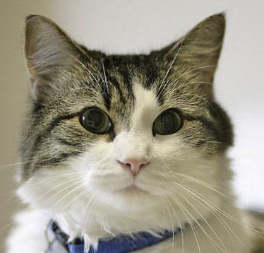 Sự thật về chú mèo có khả năng đoán trước cái chết