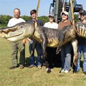 Tái mặt trước con cá sấu khổng lồ, to lạ thường