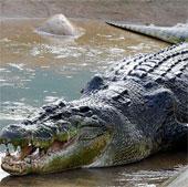 Những con vật khổng lồ
