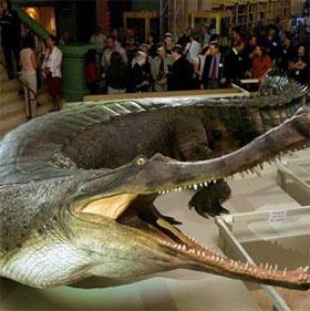 Bí quyết sinh tồn của cá sấu cùng thời khủng long