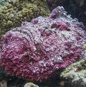 7 sinh vật kỳ dị dưới biển sâu